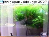 ジャングル水槽
