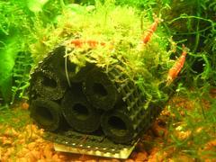 竹炭ハウス